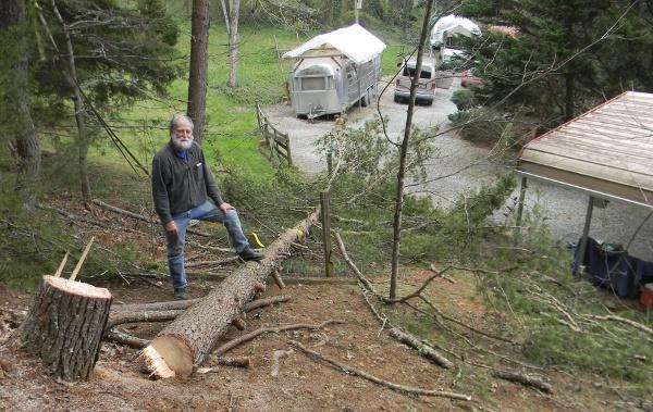 pine down