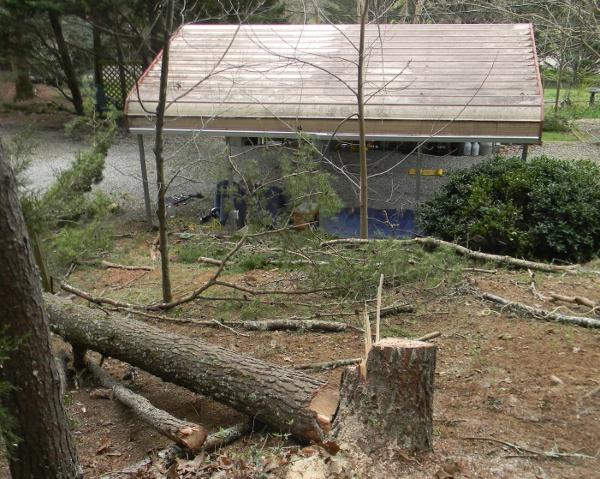 pine down2