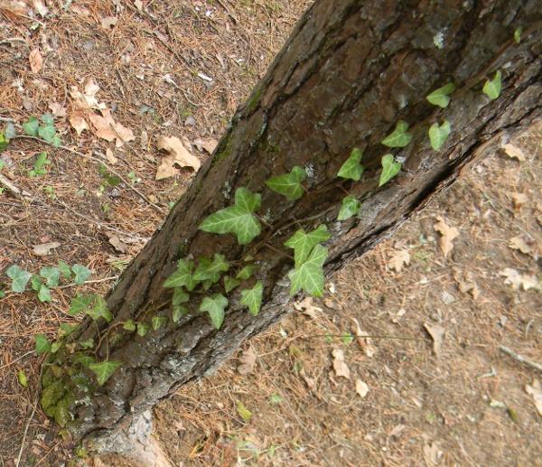 pine & moss